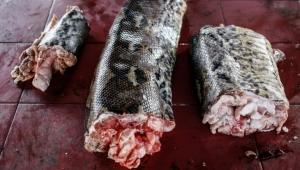 محبو الخفافيش والجرذان والأفاعي يواصلون أكلها في إندونيسيا رغم فيروس كورونا