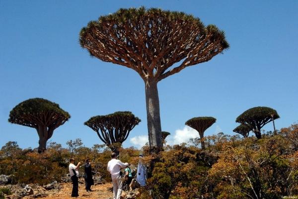 Saudi forces cancel UAE flight to Socotra