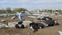 """القصف يهدد """"سلة غذاء اليمن"""" بالدمار ويحصد أرواح الفلاحين (تقرير خاص)"""