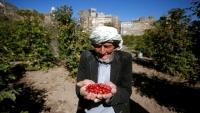 الجارديان: حصار السعودية لليمن أعاق زراعة البُن وأوجد مشاكل لمصدري القهوة (ترجمة خاصة)