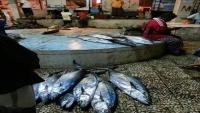 ارتفاع أسعار سمك التونة في عدن