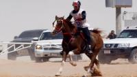 بسبب التحايل.. تعليق مشاركة الإمارات في المسابقات الدولية للفروسية