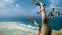 سقطرى ضمن الاحتفالات العالمية باليوم العالمي للأراضي الرطبة