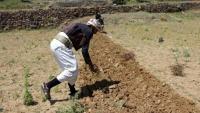 تدهور الري يوسّع رقعة الجوع في اليمن