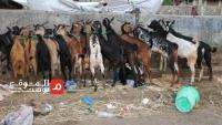 سبع سنوات حرب وانهيار للعملة.. كيف يستقبل اليمنيون عيد الأضحى؟ (استطلاع)